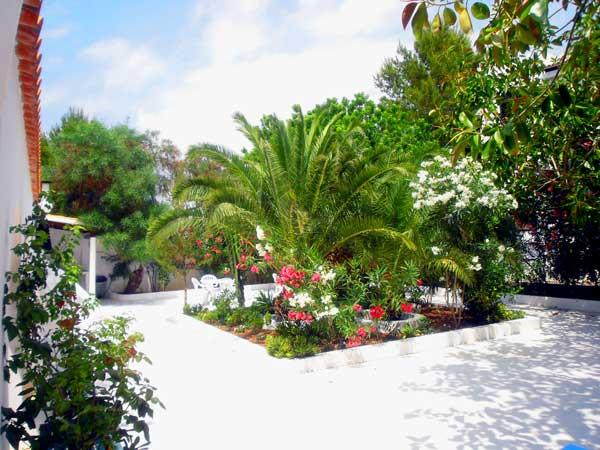 Apartamentos en ibiza apartamentos la pampa for Tipos de pinos para jardin fotos
